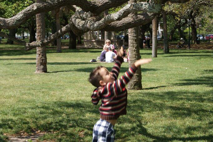 Charleston Angel Oak Trees - angel touch