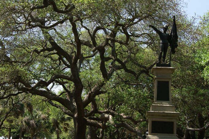 Charleston Angel Oak Trees - art and nature