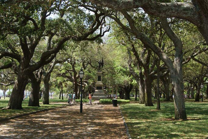 Charleston Angel Oak Trees - angel shadows
