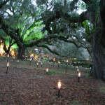 lights and angel trees