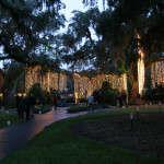 Twinkling lights hanging in the oak angel trees