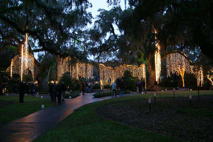 Ling Lights Hanging In The Oak Angel Trees
